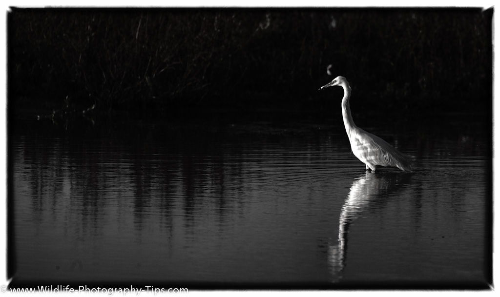 Black and White Nature Photography - Wildlife Photography Tips