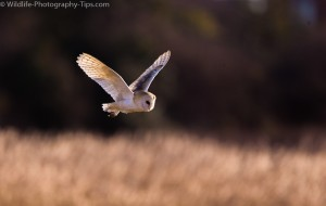 Photographing birds in flight using the center point